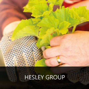 Leadership & Management for Hesley Group text box